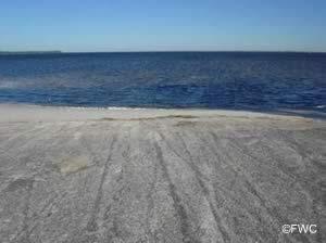 carl gray saltwater boat ramp panama city florida 32401