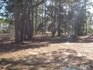 picnic along grand lagoon at st andrews state park