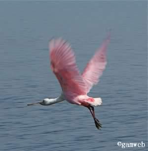 merritt island wildlife