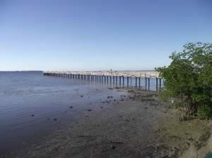 overall view of fishing pier at bayshore live oak