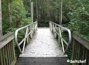 short walk from parking lot to dock at palmetto leaves south