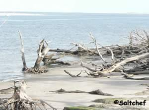 drifwood on beach big talbot