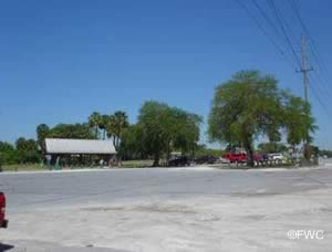 the picnic and parking area at williams park riverview florida