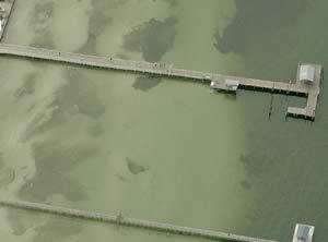 bookelia fishing pier