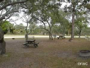 picnic at shell mound park levy county fl