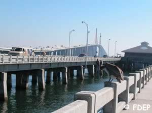 skyway saltwater fishing pier tampa bay florida