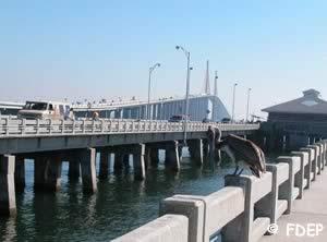 skyway saltwater fishing pier tampa bay florida