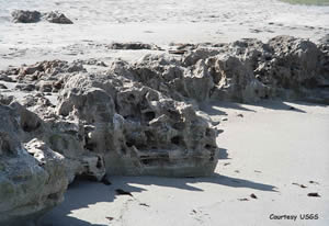 coquina rock formations blowing rocks martin county