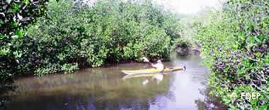 kayaking at st lucie inlet