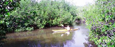 kayaking at st lucie inlet preserve