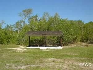 picnic at john pennekamp florida state park in the keys