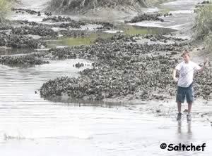 casting a bait net at low tide at egans creek
