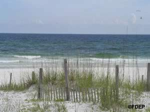 beach at henderson state park florida