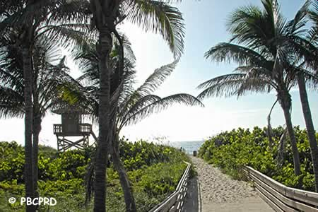 boardwalk at ocean reef park