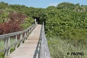 boardwalk to ocean ridge hammock beach