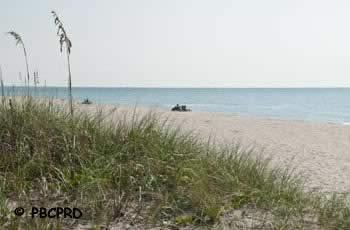 ocean ridge hammock park beach