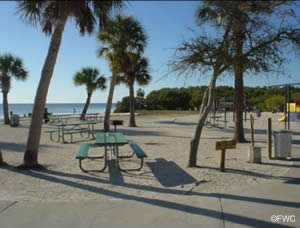 picnic area at robert rees park and boat ramp new port richey