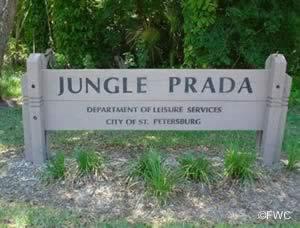 entrance to jungle prada st petersburg