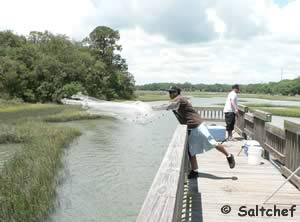 fishing on moultrie creek st augustine