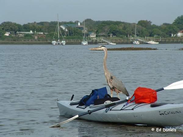 kayak fishing at anastasia state park