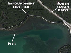 bear point sanctuary fishing piers ft pierce fl