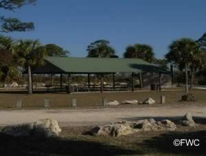 picnic area at hagen's cove taylor county florida