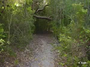 green mound trails
