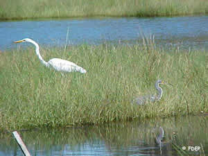 wildlife viewing at tomoka park fl