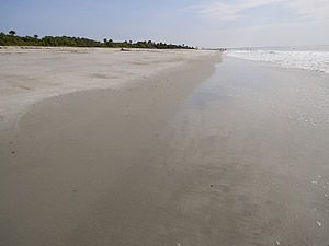 view of beach at edisto beach state park