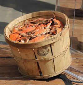 basket of steamed Maryland blue crabs