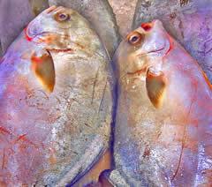 saltwater fish on ice