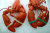 cooked lobster for sale