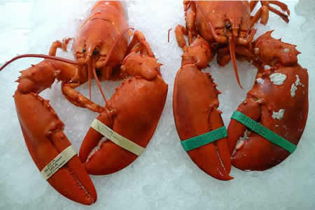 two steamed lobsters on ice