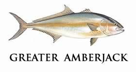 greater amberjack
