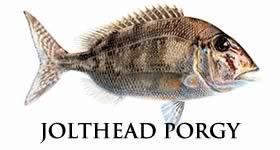 jolthead porgy