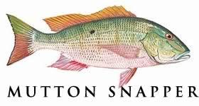 mutton snapper