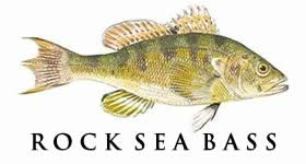 rock sea bass