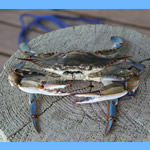 blue crab recipes